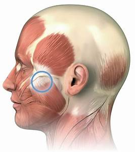 Massage For Jaw Pain  Masseter