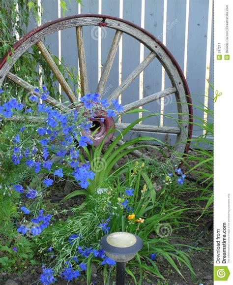blue flowers wagon wheel stock image image