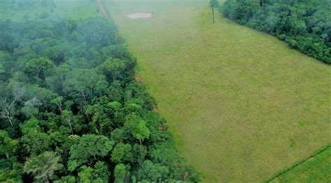 deforestation  climate change climate institute