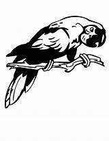 Coloring Parrot Colouring Megalodon Bird Birds Clipart Clipartbest sketch template