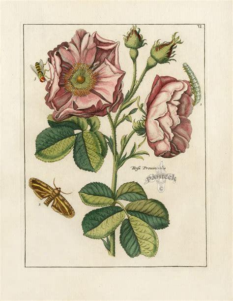 how to make botanical prints 17 best images about botanicals on pinterest flower prints vintage and antiques