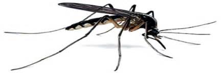 le g 233 raniol seule substance efficace contre les moustiques