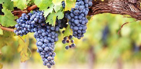 comment choisir sa cuisine comment planter et entretenir une vigne femme actuelle