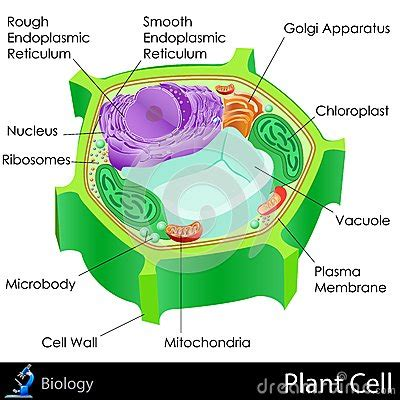 plant cell stock photography image