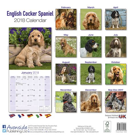 calendario english cocker spaniel em europosterspt