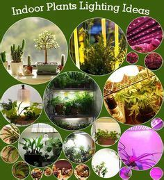 Grow Lights For Indoor Plants Home Depot by 1000 Images About Indoor Plants Lighting On