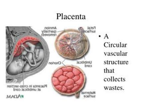 ppt placenta previa placental abruption powerpoint