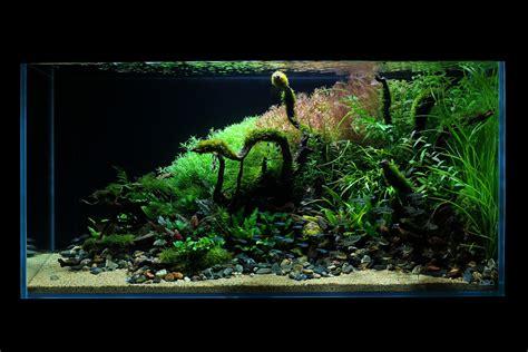 ada aquascape ada cube garden 90 p garden ftempo