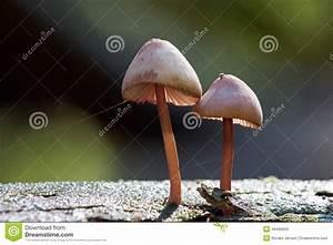 Holz Wachsen Bienenwachs : pilze die auf totem holz wachsen stockfoto bild 44465650 ~ Orissabook.com Haus und Dekorationen