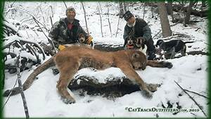 Colorado Big Game Hunts & Photos - Guided deer and ...