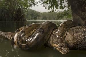 Wallpaper Anaconda (66+ images)