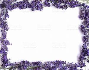 Lavender Frame stock photo 182209366 | iStock