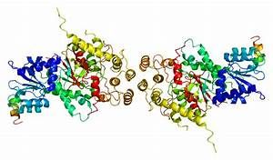 Syntaxin binding protein 3 - Wikipedia