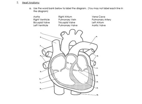 Label The Diagram Of The Heart Below Image Collections  How To Guide And Refrence