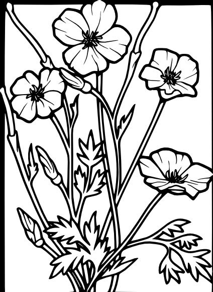 poppy drawing template  getdrawings