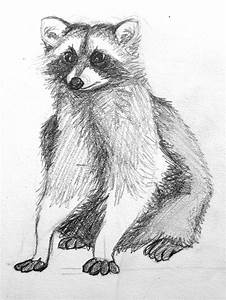 277 Best Raccoons Drawings And Paintings Of Raccoons