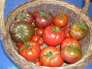 Feuille De Tomate : purin de feuilles de tomate ~ Melissatoandfro.com Idées de Décoration