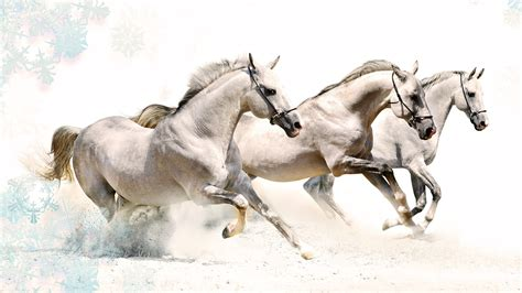 Horse Images Hd