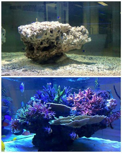 aquascape reef best 25 reef aquascaping ideas on reef