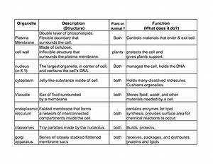 Worksheet  Cell Organelles And Their Functions Worksheet