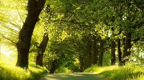 3d Green Nature Wallpaper by Nature Wallpapers 1080p Wallpaper Cave