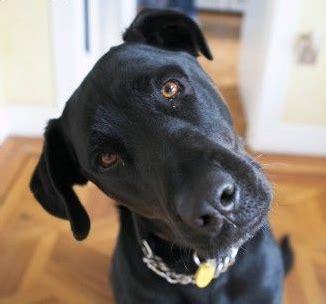 dog whistling  disaster pr