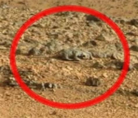 Where Is the a Rat On Mars Rover