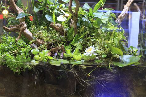 tips  converting   fish    planted tank