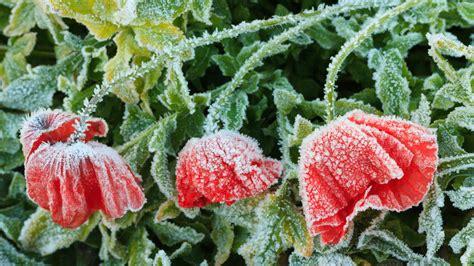 Garten Rat Pflanzen Vor Schuetzen by So Sch 252 Tzen Sie Garten Und Balkonpflanzen Vor Starkem