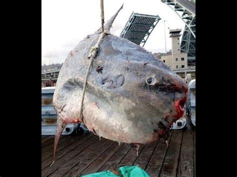 le plus gros aquarium du monde pez el pez m 225 s grande mundo