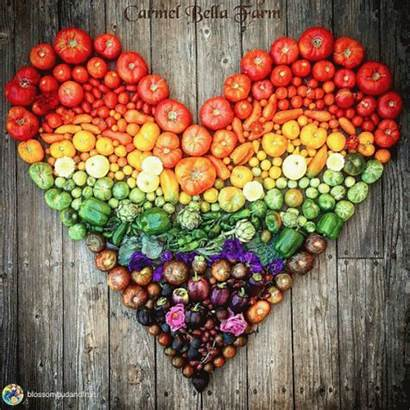 Heart Vegetables Fruits Shaped Join Garden Seed