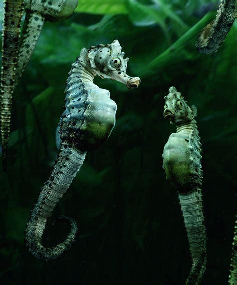 Agonists Marine Creatures