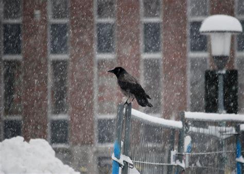 From fugl (bird) + influensa (influenza, flu). Vestfold, Tønsberg | Nytt funn av fugleinfluensa ...