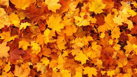Orange Leaf Wallpaper by Free Photo Orange Leaves Tree Orange Leaves Free