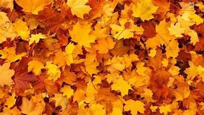 Leaves Orange Autumn Fall Phone Desktop Nature