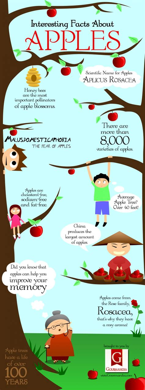 Interesting Facts About Apples Visually