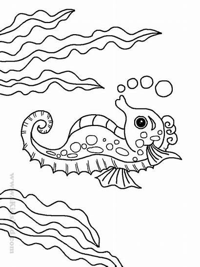 Coloring Sea Pages Animal Boys