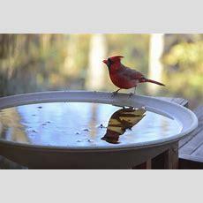 7 Best Bird Baths For 2019
