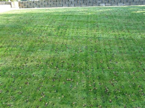 lawn aeration the five w s of lawn aeration beautiful blooms landscape design llc
