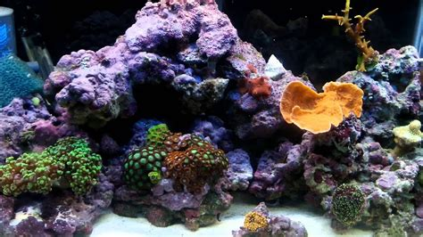 cycle saltwater tankbest   rock