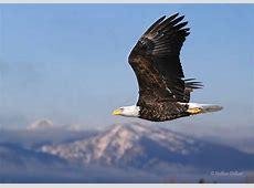 What's That Bird? Five Valleys Audubon Society
