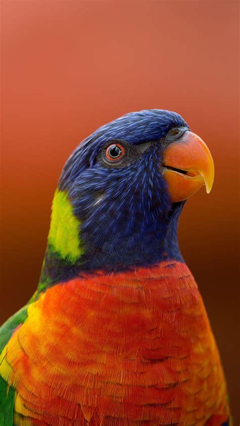 Download Wallpaper 1080x1920 Parrot Bird Beak Wildlife