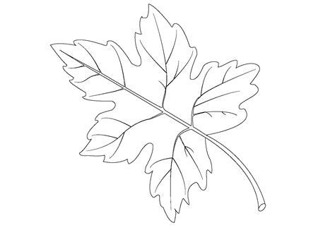 Coloring Leaf by Leaf Coloring Pages To Print Loving Printable