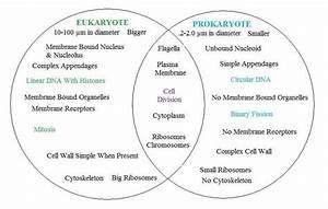 How Are Eukaryotes And Prokaryotes Similar
