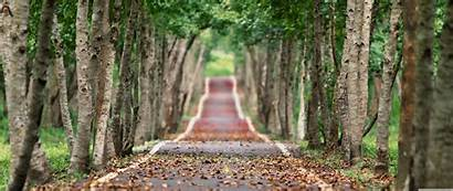 Road Tree Lined Wallpapers