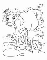 Coloring Buffalo Animals Calf Babies Drawing Cape Animal Az Printable Cow Wild Bestcoloringpages Adult Getdrawings Bills Getcolorings Meta Popular Native sketch template
