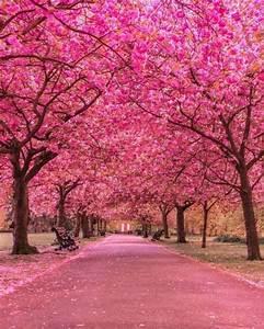 Planter Un Cerisier : planter un cerisier du japon am nager vos ext rieurs ~ Melissatoandfro.com Idées de Décoration