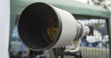 wildlife photography   canon cameras  lenses