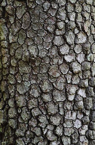 tree bark offers color texture  pattern garden design