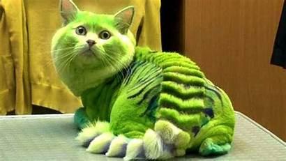 Dangerous Cat Breeds